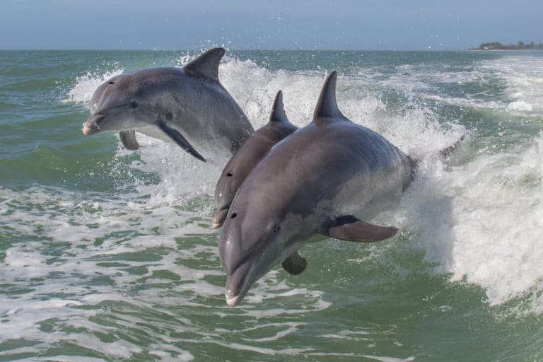 virginia beach excursion dolphin watching